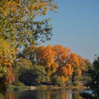 Осень играет, чарует, восхищает... :: Тамара Бедай