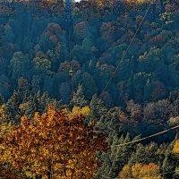 Latvia 2018 Autumn in Sigulda 16 :: Arturs Ancans
