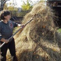 Заготовка сена :: Светлана Рябова-Шатунова