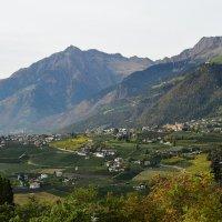 Там , где растет виноград :: Николай Танаев
