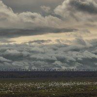 Пейзаж с чайками :: Константин Бобинский