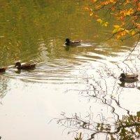 Октябрь в парке Октября :: Нина Бутко