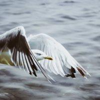 чайка :: Оля