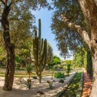 Бахайские сады, Хайфа :: Владимир Демчишин