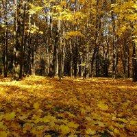 Городской парк в октябре :: Милешкин Владимир Алексеевич
