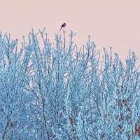 Розовый сон на рассвете о ... лете! :: Елена (Elena Fly) Хайдукова