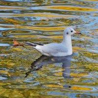 Чайка на пруду :: Анна Васильева (Anna-82V)