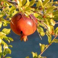 Сладкий плод. :: ТаБу