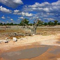 Африка.Период Дождей. :: Jakob Gardok
