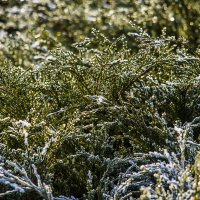 тающий снег :: Петр Беляков