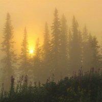 В дремучем тумане :: Сергей Чиняев