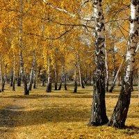 Золотая осень :: Mikhail Irtyshskiy