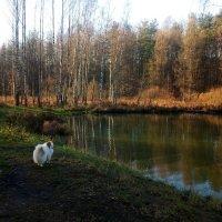 В ноябре у реки :: Елена Павлова (Смолова)