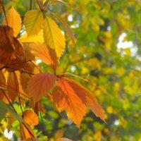 Осенний этюд... :: Тамара (st.tamara)