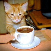 - Вот что эти люди находят в кофе? То ли дело - валерьянка! (рис.) :: Глeб ПЛATOВ