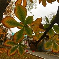 Осенняя прозрачность листьев :: Надежда