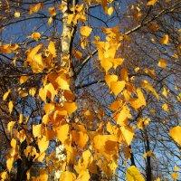 Краски осени.. :: Зинаида