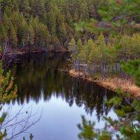 листьев нет, но как красиво! :: Роман Дудкин