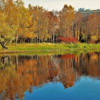 Золотые отражения берёзовой рощи... :: Sergey Gordoff