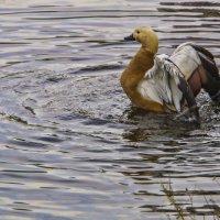 На Капустинском пруду :: marmorozov Морозова