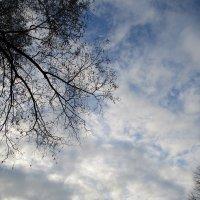 Ноябрьское небо. :: Зинаида
