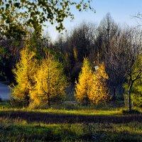 Осенний этюд :: Alex Sash