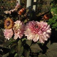 Цветы ноября :: Ирина