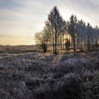 Утра робкие лучи.. :: Регина Волгина
