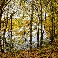 """Цикл """"Осенний пруд"""" 2 :: Viacheslav"""