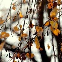 Последние листы... :: жанна нечаева
