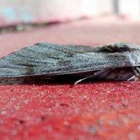 про мотыльков и бабочек 1 :: Александр Прокудин