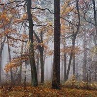 В мелодиях осеннего тумана... :: Лесо-Вед (Баранов)