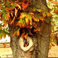 Октябрь в парке Октября... Ухо природы?! :: Нина Бутко