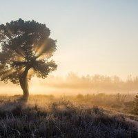 Утренний свет :: Виктор Позняков