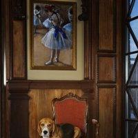 Портрет собаки в интерьере #2 :: Тата Казакова