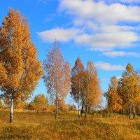 Осенний день :: Сергей