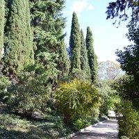 Ботанический сад. Ялта :: Виктор Шандыбин