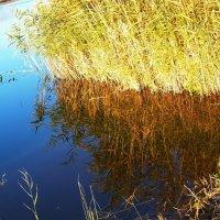 Отражение в пруду камышей... :: Любовь К.