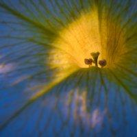 Солнце в цветке :: Владимир Шамота