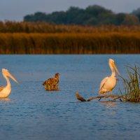 Троица – пеликаны и орлан :: Фёдор. Лашков