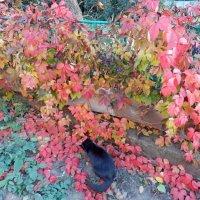 Кошка Сажа и осень :: Люша