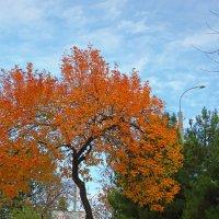 Осень в городе :: Светлана