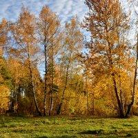 Золотой октябрь :: Ирина Ярцева