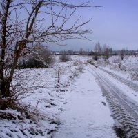 По первому снегу... :: Нэля Лысенко