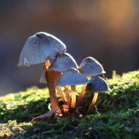 Ноябрьские грибочки. :: LIDIA V.P.