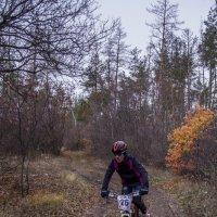 по лесу :: Алина Гриб