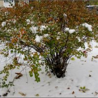 Первый снег :: Нина Бутко