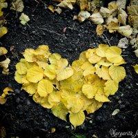 Любовь сезонам всем покорна :: Маргарита Брижан