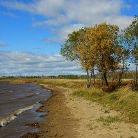 Осенний   ветер... :: Нэля Лысенко