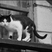 Кот по кличке Дядя Стёпа :: Глeб ПЛATOВ